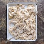 Shredded chicken breast with two forks on white tray